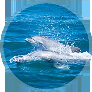 イルカウォッチングのイメージ